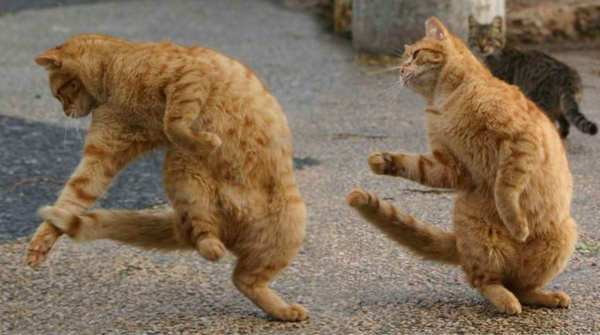 Кошачьи пляски